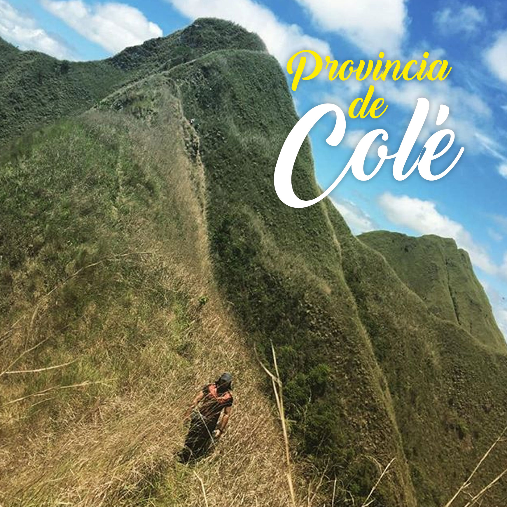 cocle
